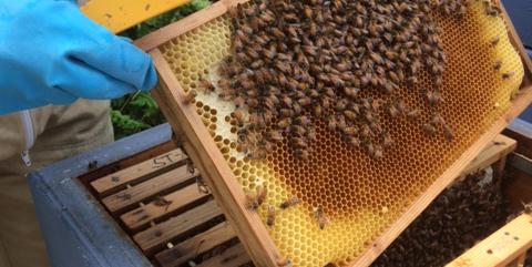 Vi värnar om den biologiska mångfalden – hyr bikupa!